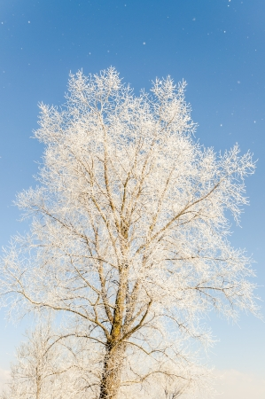 an image of winter scenery, trees covered by snow Stock Photo - 16643684