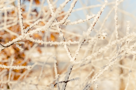 an image of winter scenery, trees covered by snow Stock Photo - 16643653