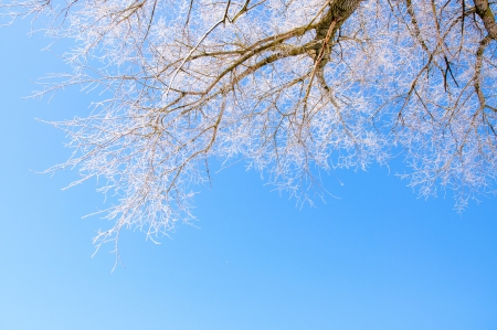 an image of winter scenery, trees covered by snow Stock Photo - 16643683