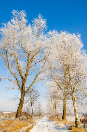 an image of winter scenery, trees covered by snow photo