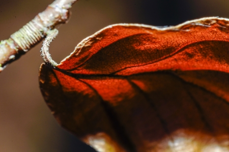 An image of macro plant photography. close up. Stock Photo - 16643701