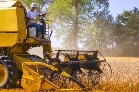 An image of combine harvesting corn