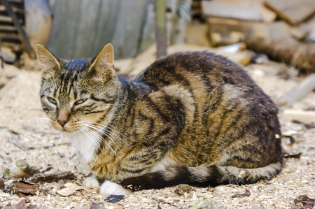 An image of homeless cat Stock Photo - 16918708