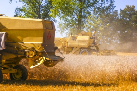 An image of combine harvesting corn Stock Photo - 16927027