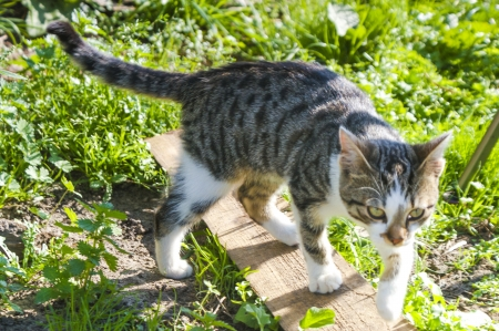 An image of homeless cat Stock Photo - 16918648