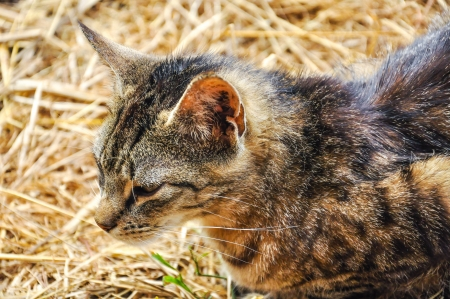 An image of homeless cat Stock Photo - 16918806