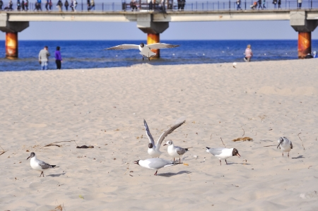 An image of Seagull on the beach photo