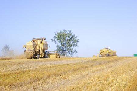 Een beeld van maaidorser oogsten maïs