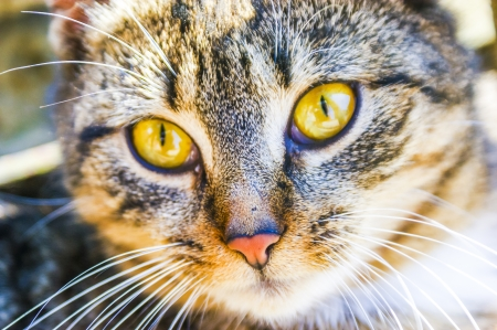 An image of homeless cat Stock Photo - 16931730