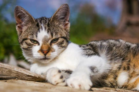 An image of homeless cat Stock Photo - 16931670