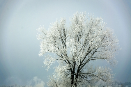 An image of tree covered by snow in winter Stock Photo - 17297079