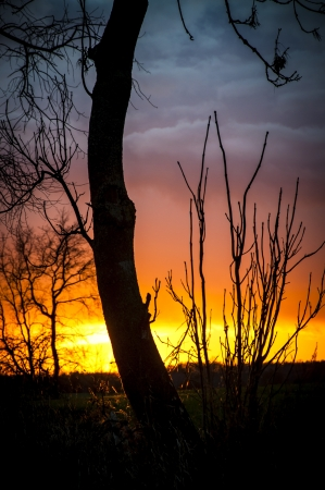 An image of tree silhouette during amazing sunset Stock Photo - 17295662