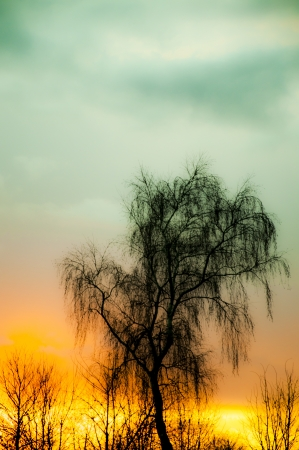 An image of tree silhouette during amazing sunset Stock Photo - 17295972
