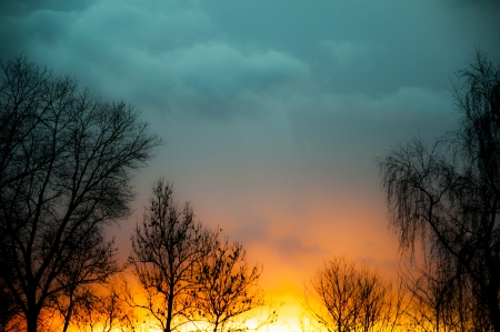 An image of tree silhouette during amazing sunset Stock Photo - 17296566