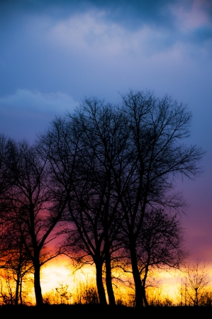 An image of tree silhouette during amazing sunset Stock Photo - 17296711