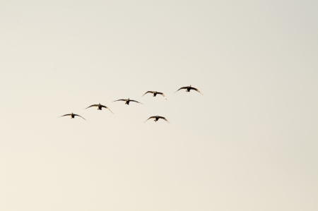 An image of geese migration over the sky photo