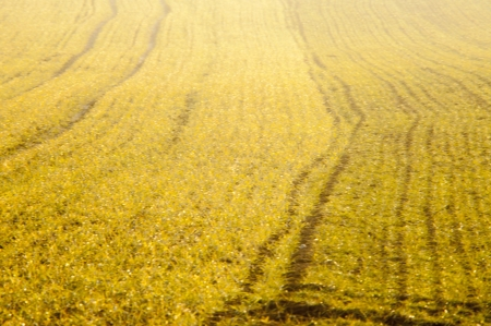 An image of cereal field photo