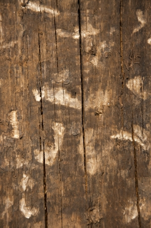 An image of wooden background photo