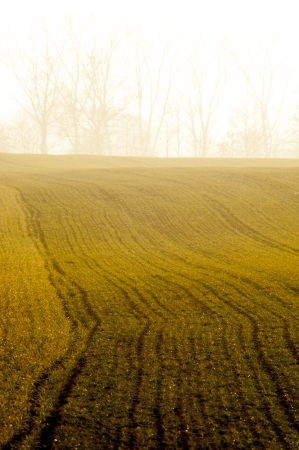 An image of cereal field Stock Photo - 18894639