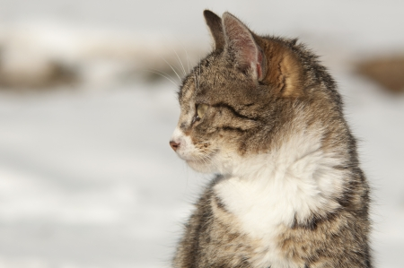 An image of funny cat outdoor Stock Photo - 18894114