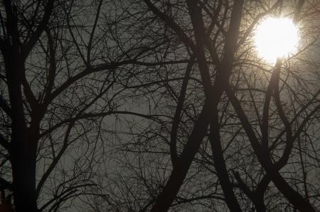 nightfall: An image of tree at dusk