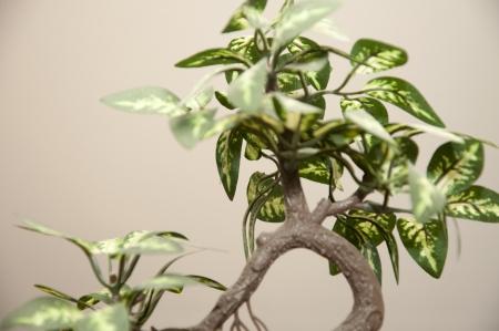 An image of bonsai tree photo