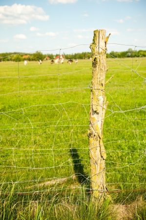 electric fence: Electric fence on the meadow