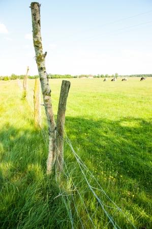 elektrischer Zaun: Elektrischer Zaun auf der Wiese