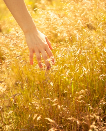 woman's hand touching the blades of grass at sunset photo
