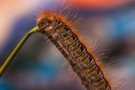 low angle views: �ngulo de visi�n baja catepillar gusano movi�ndose en la hierba verde