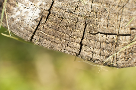 an image of background wood surface photo