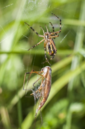 an image of spider on insect attack