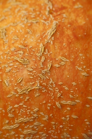 an image of close-up pumpkin peel photo