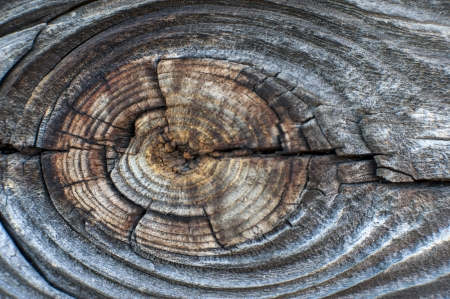 an image of wood surface photo