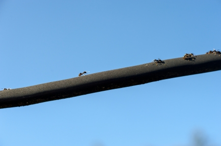 an image of ants marching to the black lines Stock Photo - 22673116