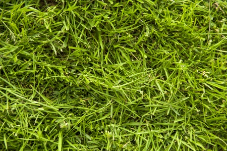 an image of grass surface Stock Photo