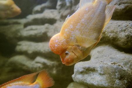 coral reef fish: Sea life: exotic tropical coral reef fish Stock Photo