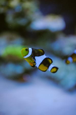 reef fish: Sea life: exotic tropical coral reef fish Stock Photo