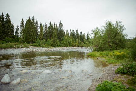 mountain river with stones in summer time Stock Photo