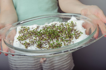 cress sprouts on the plate ready for eat
