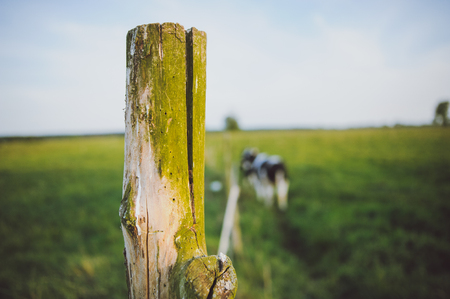 Wooden electric fence on a green meadow used for cow containment