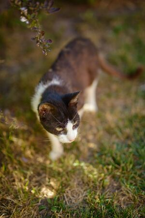 Portrait of domestic cat outdoor. Spring or summer time