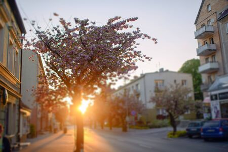 City street in early spring with pink cherry tree at dusk