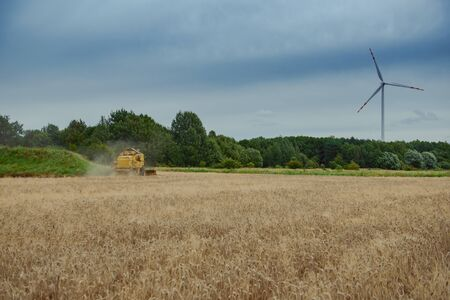 Combine harvesting wheat. Sumemr time. Agriculture background with copy space. Stock Photo