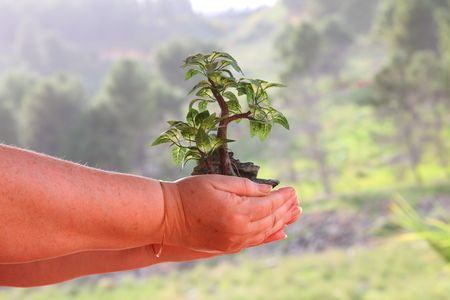 small tree in womens hands in an outdoor photo