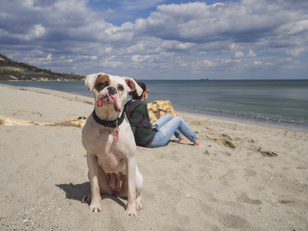 Portrait of a beautiful white boxer dog at the beach looking at camera 版權商用圖片