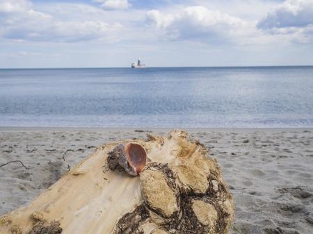 Fallen tree trunk on a sandy beach 版權商用圖片 - 112527922