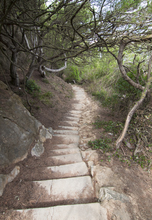 Rock stair path going down surrounded by trees