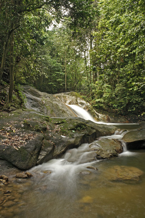 wild yam: Close view of waterfall in the jungle                                Stock Photo