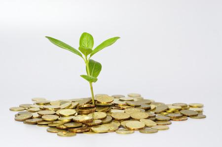 desarrollo econ�mico: Planta crece en la pila de monedas de oro - concepto financiero Foto de archivo